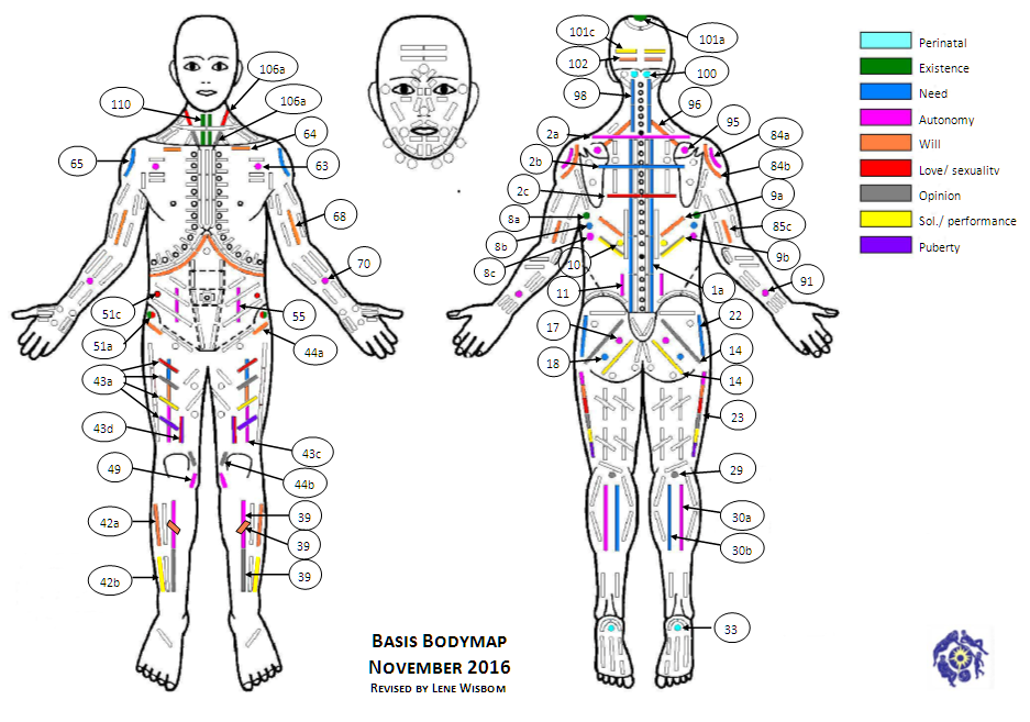 Basic Bodymap Testing & Interpretation of 42 significant muscles ...